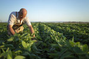 Agricultor Activo